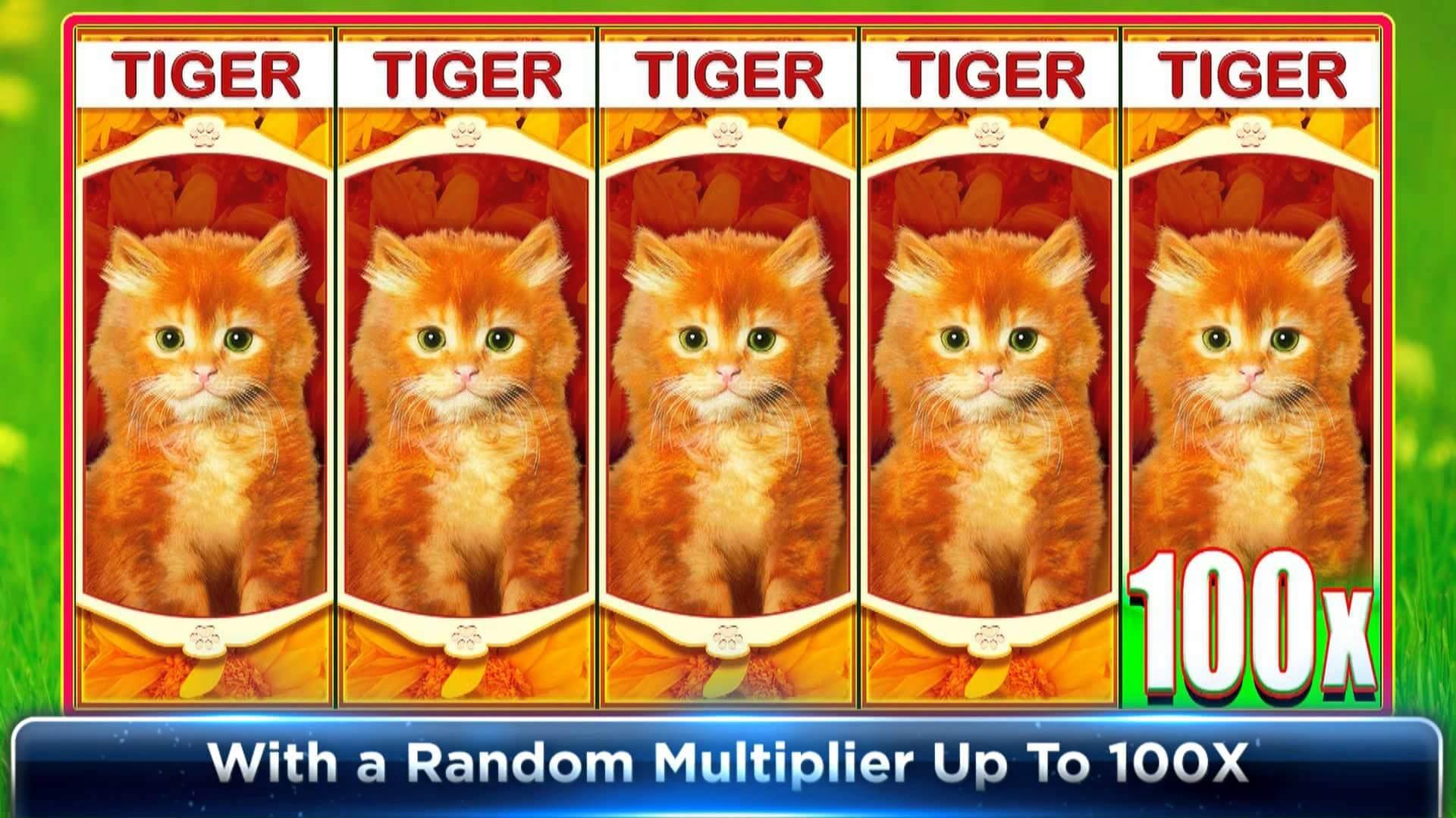 OMG Kittens Gokkast Tiger